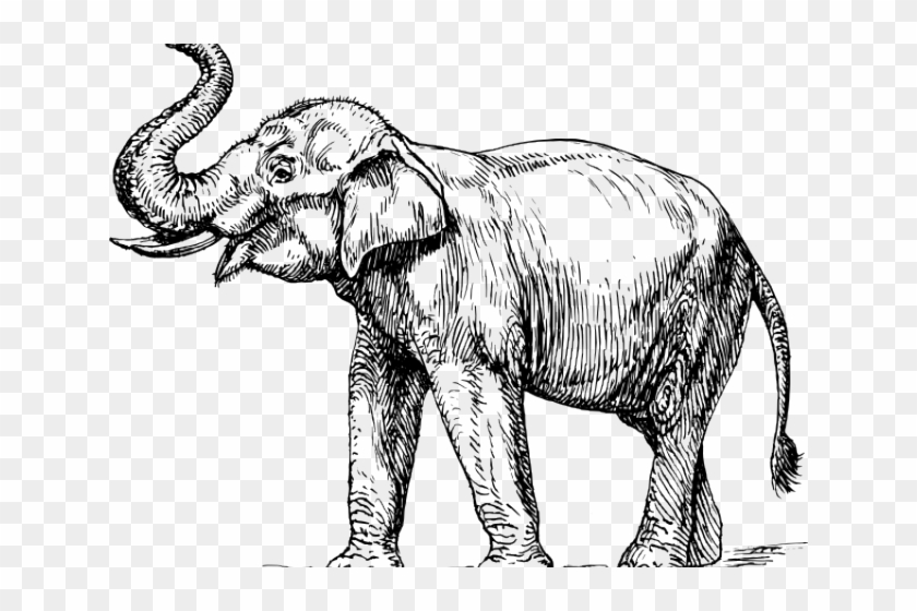 Asian Elephant Clipart Black And White.