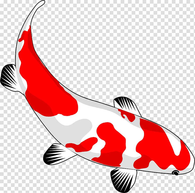 Koi Goldfish Drawing , Asian Culture transparent background.
