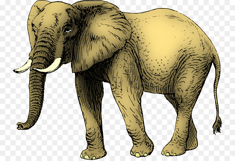 Asian elephant African elephant Drawing Clip art.