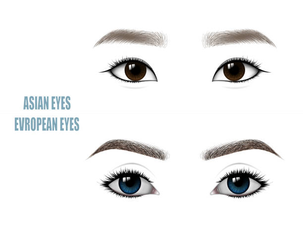 Top 60 Asian Eyes Clip Art, Vector Graphics and Illustrations.
