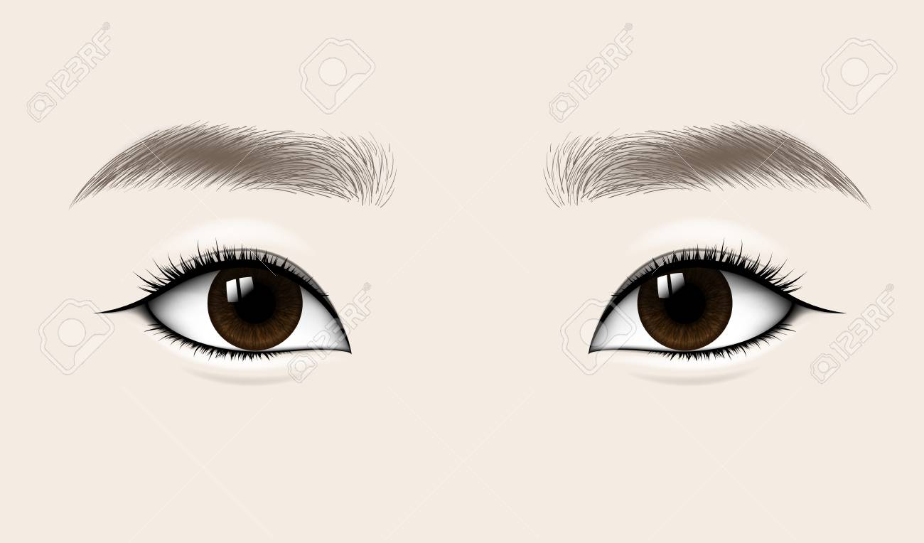 Beautiful Asian Woman Eyes and Brows. Vector illustration.