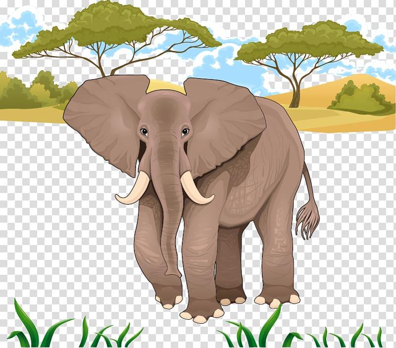 African elephant illustration, Jungle Elephant transparent.