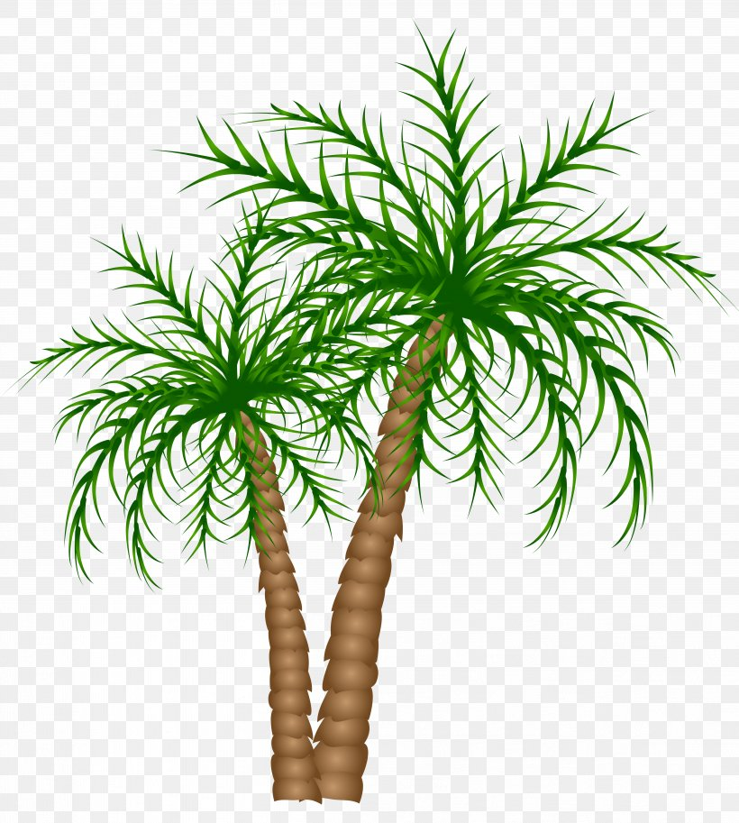 Asian Palmyra Palm Text Branch Date Palm Leaf, PNG.