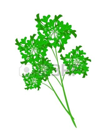 Asian parsley clipart - Clipground