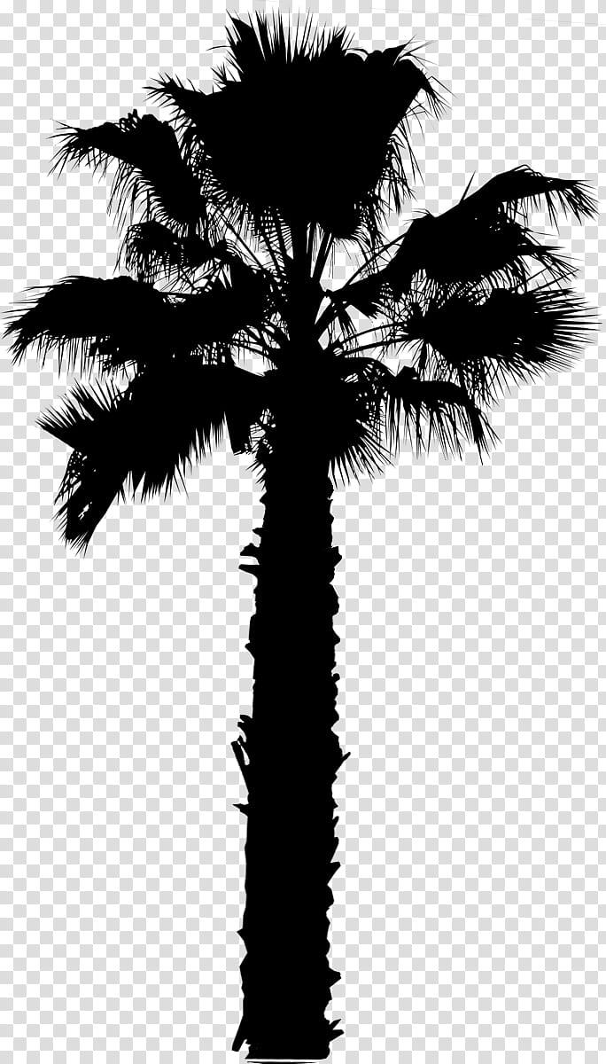 Palm Tree Silhouette, Asian Palmyra Palm, Palm Trees.