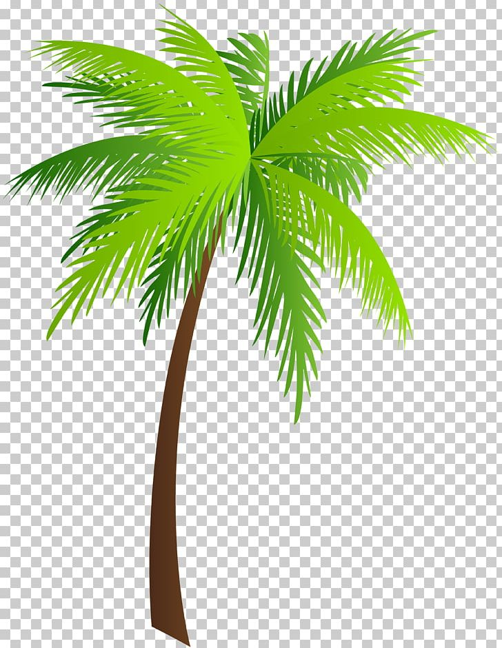 Palm Trees Asian Palmyra Palm PNG, Clipart, Arecaceae.