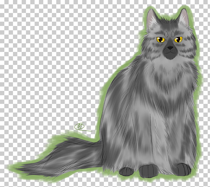 Maine Coon Nebelung Norwegian Forest cat Whiskers Asian Semi.