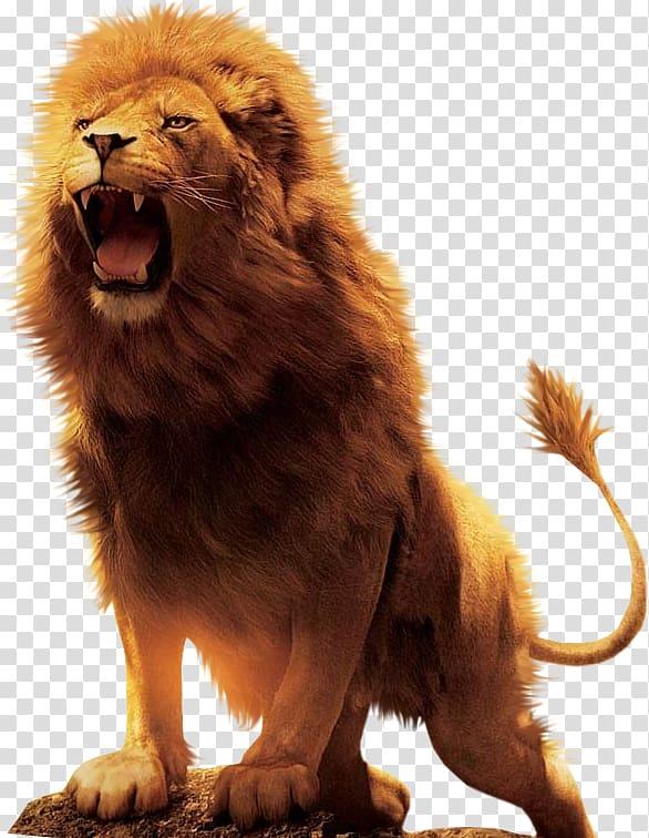 Roaring lion illustration, Aslan Lion Desktop , lion transparent.