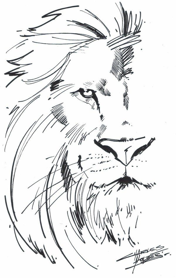25+ best ideas about Lion Drawing on Pinterest.