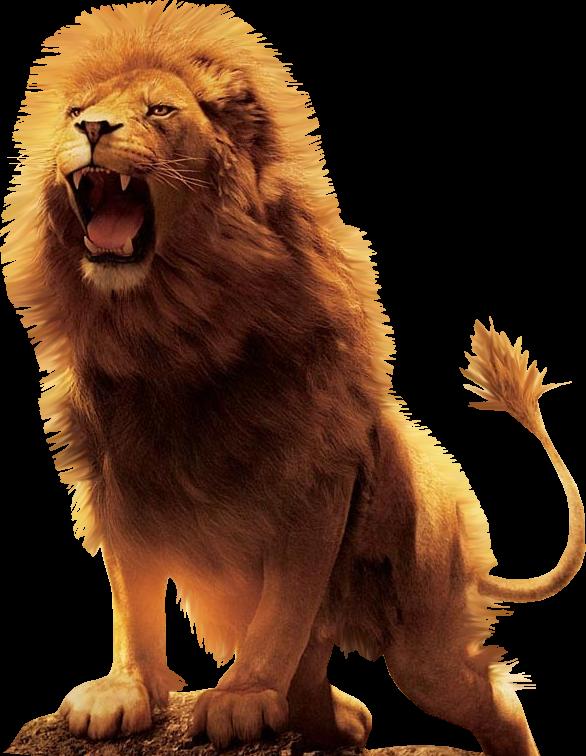 Aslan Lion Desktop Wallpaper Download.