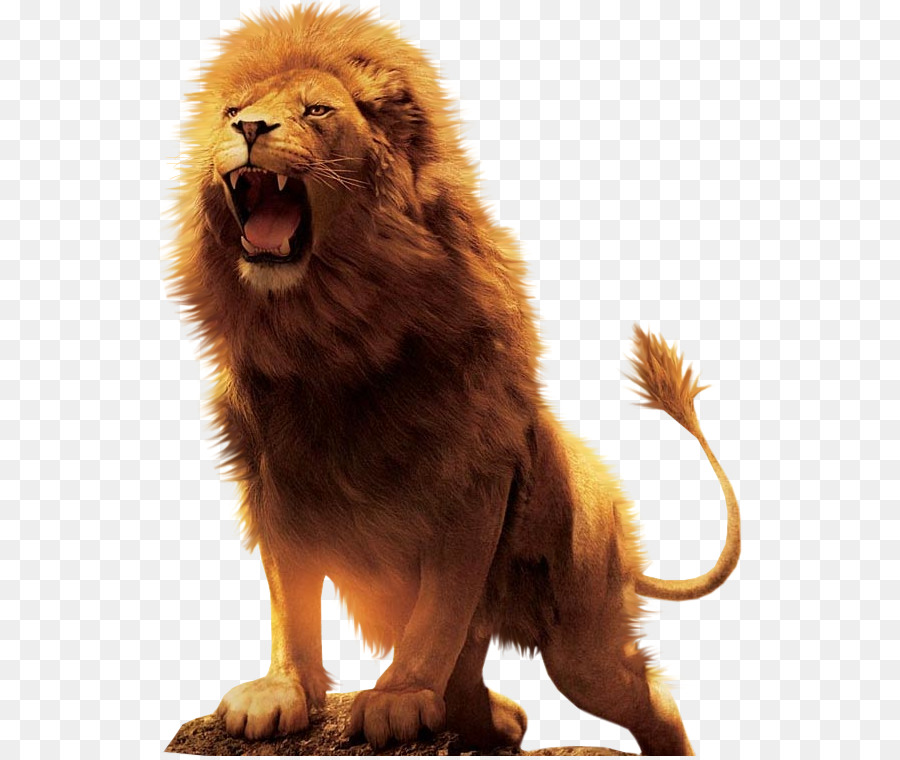 Lion Cartoon png download.