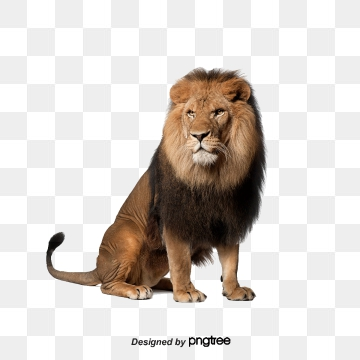 Lion PNG Images, Download 3,863 PNG Resources with Transparent.
