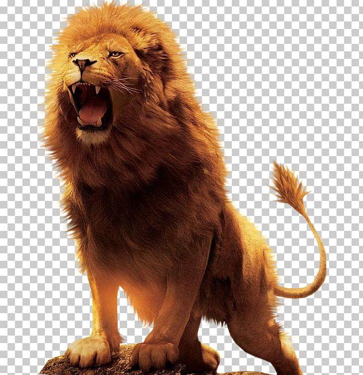 Aslan Lion Desktop PNG, Clipart, Animals, Big Cat, Big Cats.