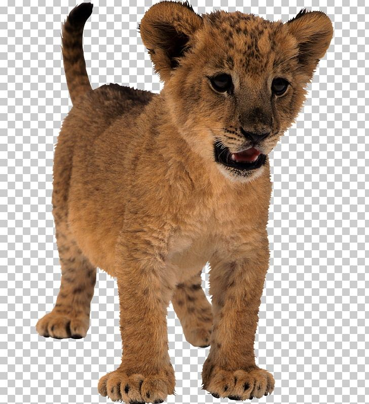 Lion Tiger PNG, Clipart, Animals, Aslan, Aslan Resimleri.