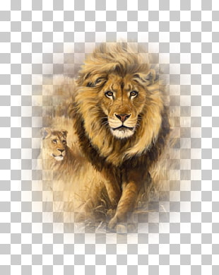 10 aslan Resimleri PNG cliparts for free download.