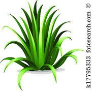 Asparagaceae Clip Art EPS Images. 36 asparagaceae clipart vector.