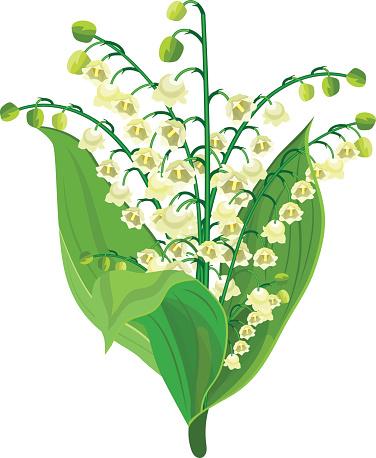 Asparagaceae Clip Art, Vector Images & Illustrations.
