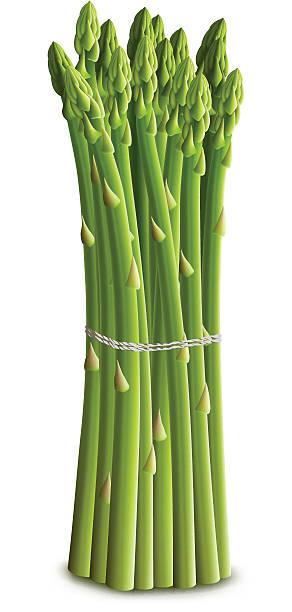 Best Asparagus Illustrations, Royalty.