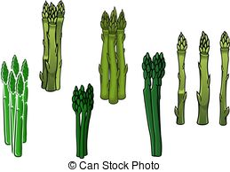 Asparagus Clipart and Stock Illustrations. 1,395 Asparagus vector.