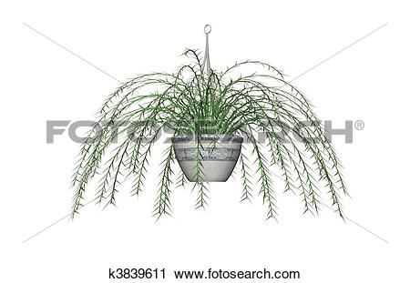 Clipart of Asparagus Fern, Hanging Plant k3839611.