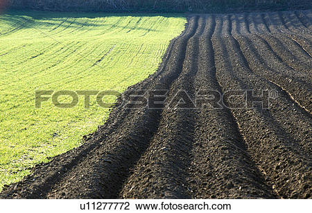 Stock Photo of asparagus field, erde, asparagus, agriculture, acre.