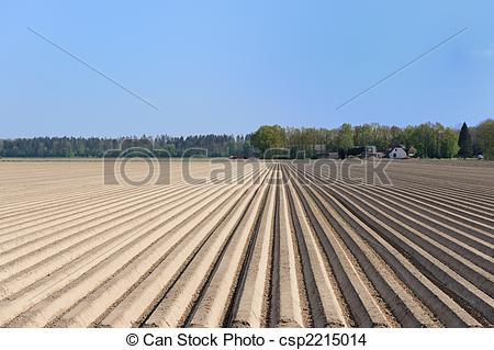 Stock Photo of Asparagus agriculture.