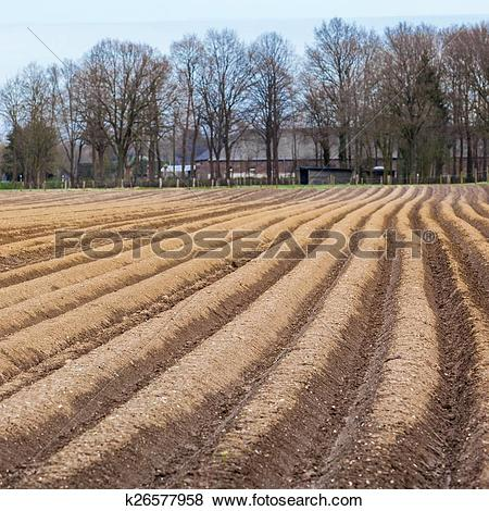 Pictures of asparagus field. k26577958.