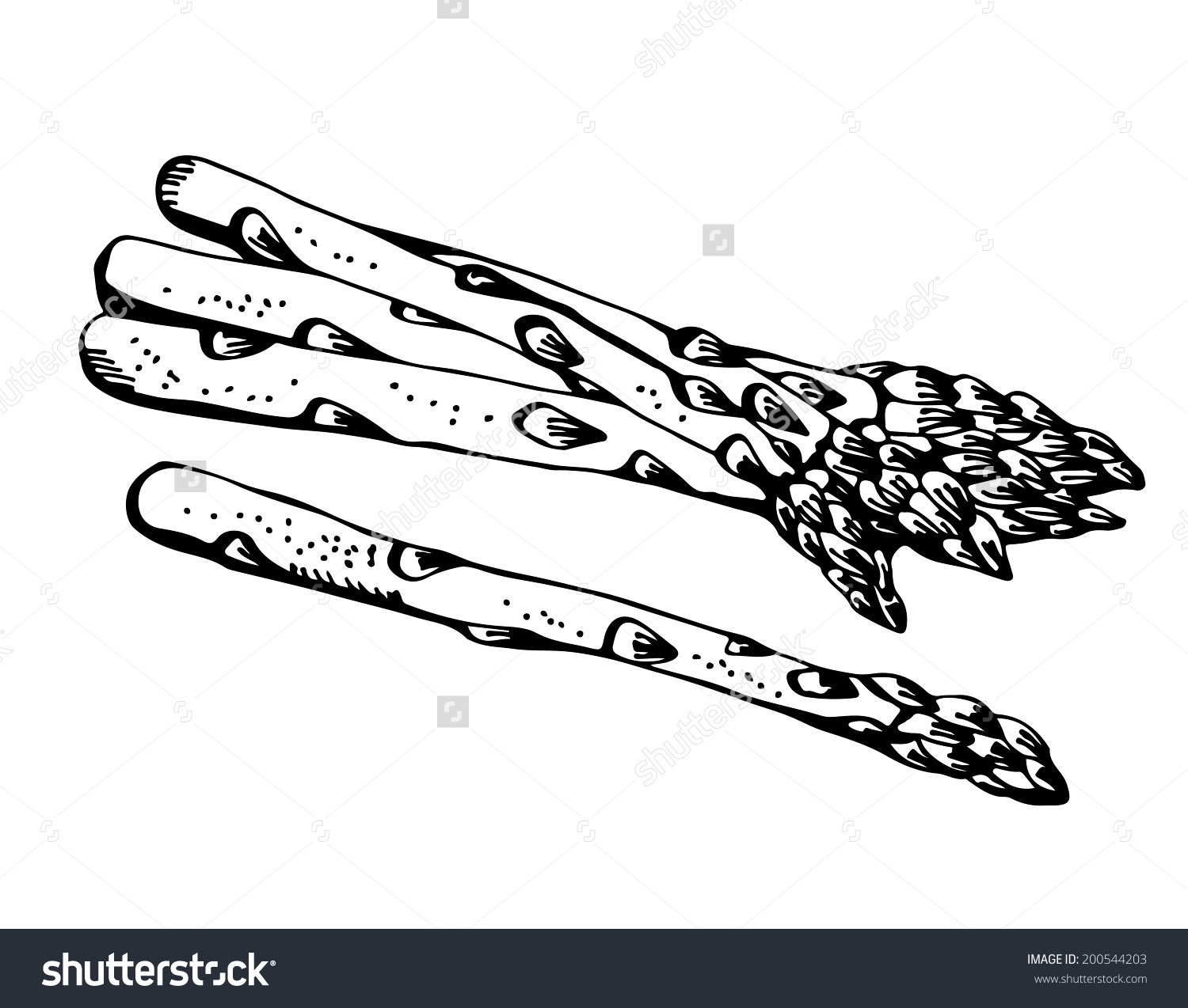 Asparagus Cartoon Vector Isolated On White Stock Vector 200544203.