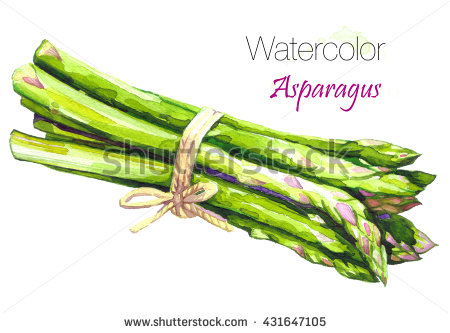 Watercolor Food Clipart Asparagus Artichoke Isolated Stock.