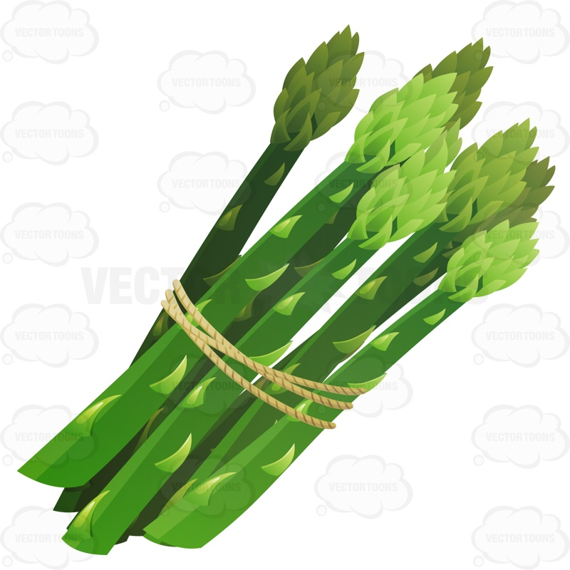 Bundle Of Asparagus Tied Together With String Cartoon Clipart.