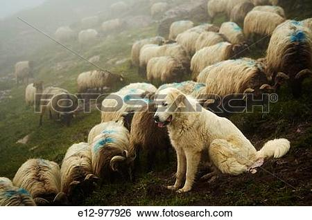 Stock Images of France, Pyrenees mounts, Pyrenees.