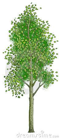 Aspen Trees Clipart.
