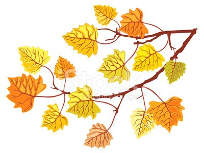 Aspen tree branch Clipart Image.