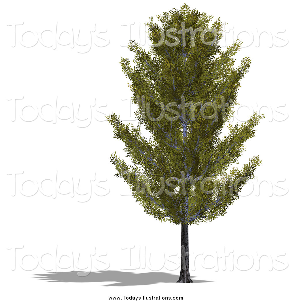 Clipart of a 3d Aspen Tree and Shadow by Ralf61.
