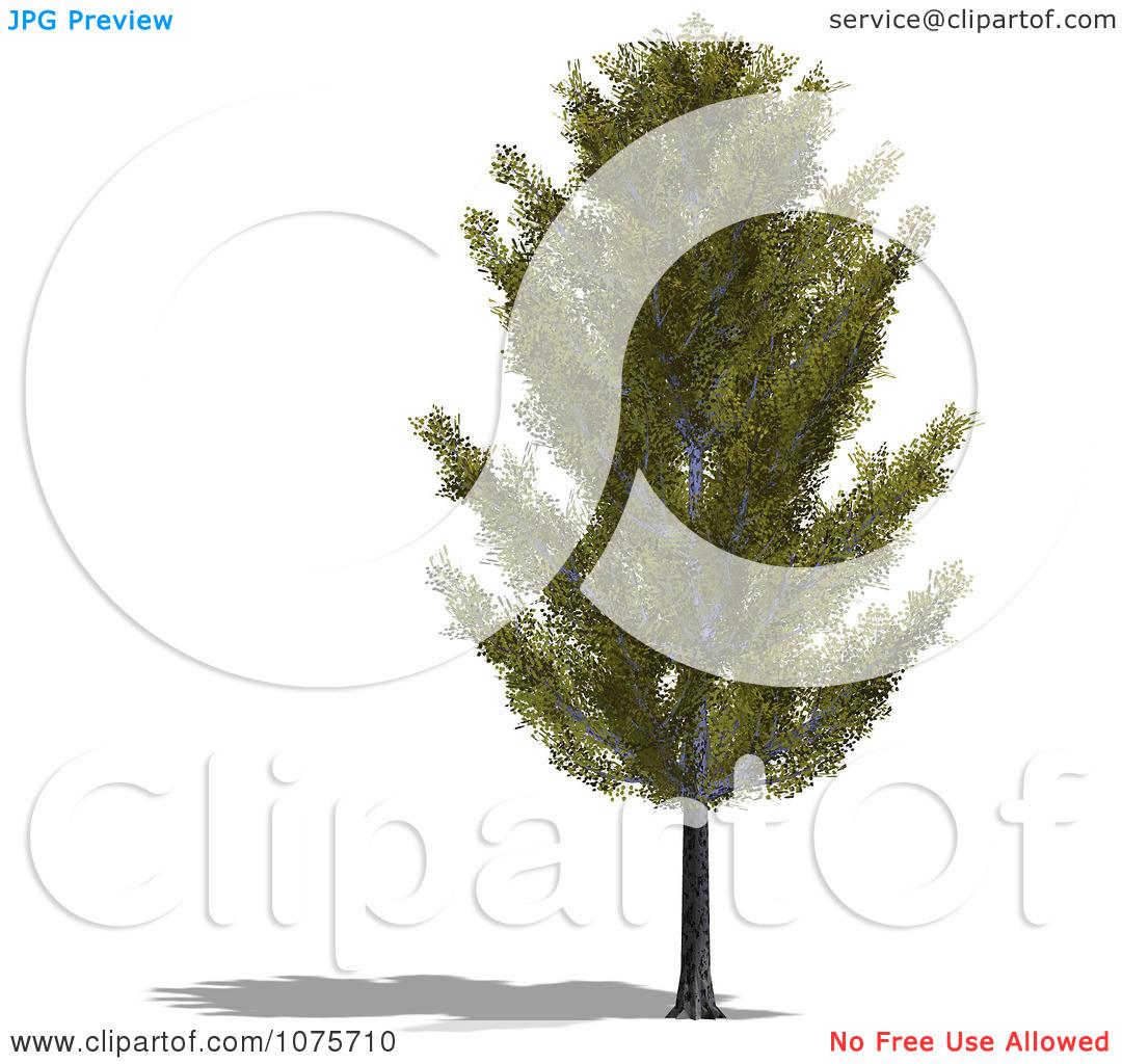 Clipart 3d Aspen Tree.