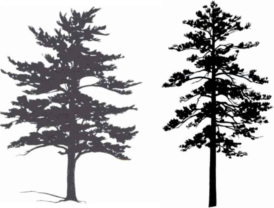 Aspen Tree Silhouette.