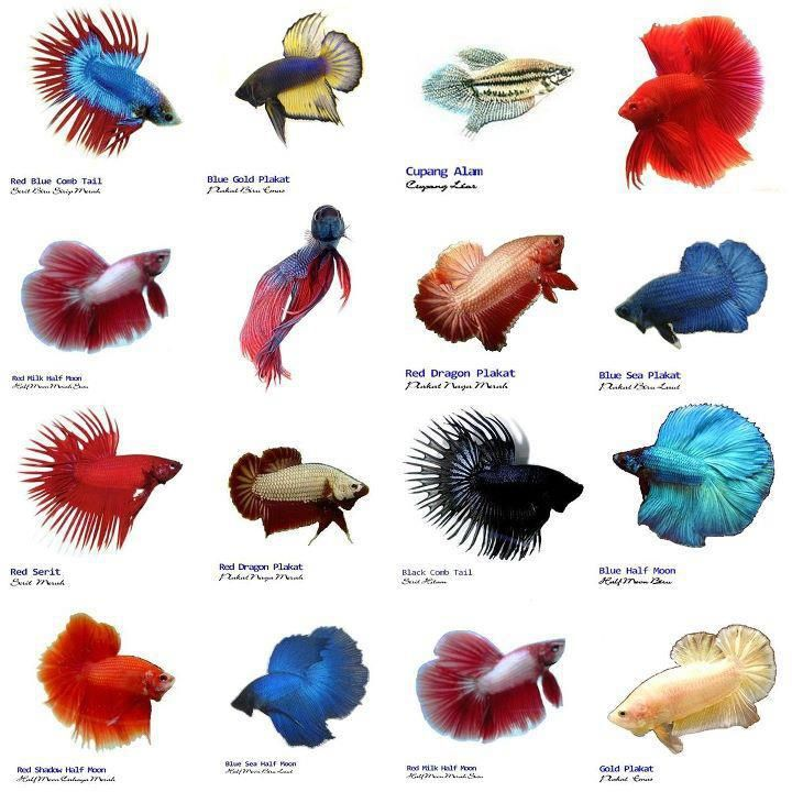 1000+ images about Aquariums and Water Pets on Pinterest.