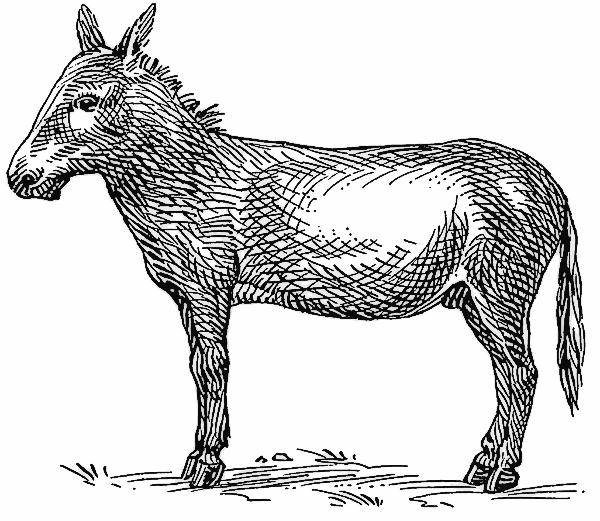Free Ass Clipart, 1 page of Public Domain Clip Art.
