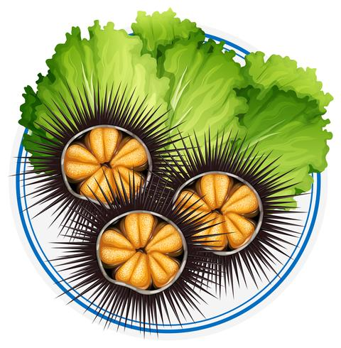 Oursins frais et légumes verts sur une assiette.