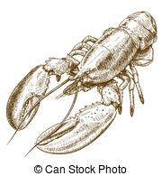 Astacus astacus Illustrations and Clipart. 13 Astacus astacus.