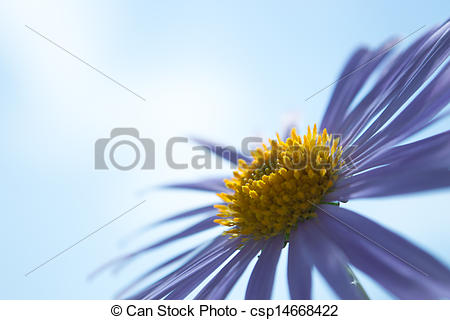 Stock Photo of Aster Alpinus flowers under a sky.
