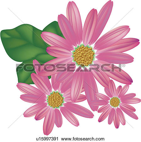 Clipart of Aster u14784464.