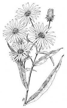 Super flowers drawing cute beautiful Ideas #drawing #flowers.
