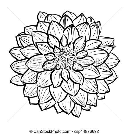 Aster Flower Clipart.