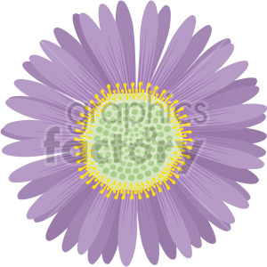 aster flower clipart. Royalty.
