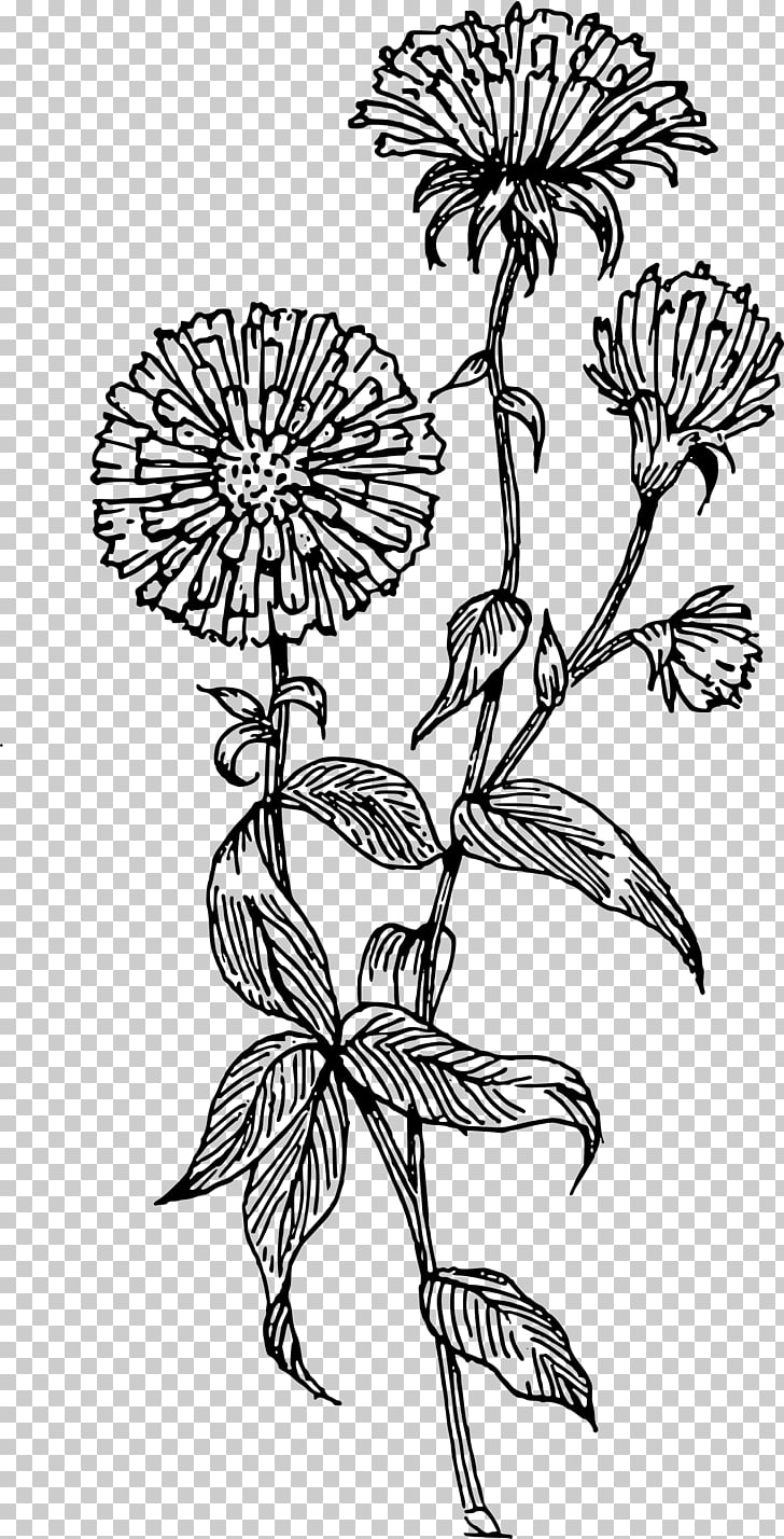 Aster Flower Drawing , flower PNG clipart.