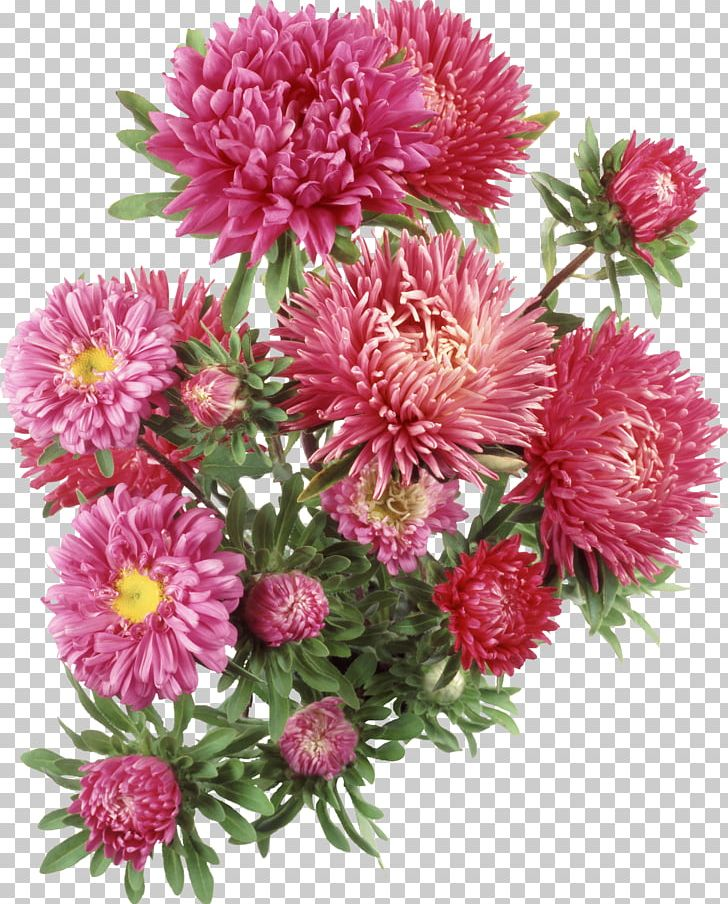 Aster Flower PNG, Clipart, Annual Plant, Aster.