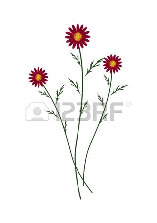 234 Asteraceae Leaves Stock Illustrations, Cliparts And Royalty.