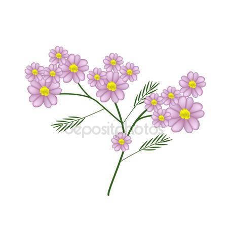 Asteraceae Stock Vectors, Royalty Free Asteraceae Illustrations.