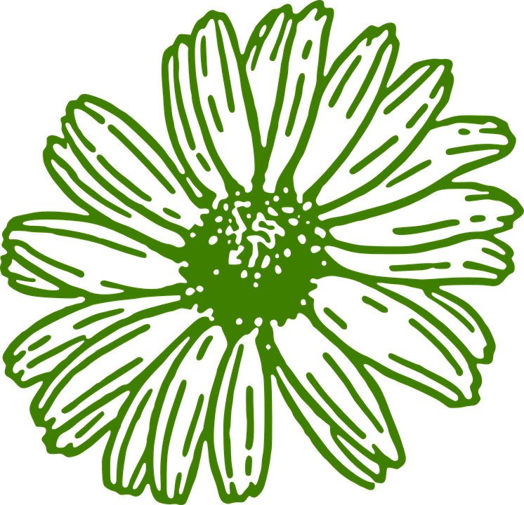 Free vector graphic: Gerbera, Daisy, Green, Flower.